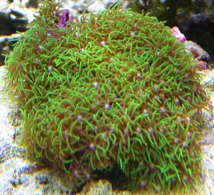 What Are The Best Corals To Get For Your Tank And What Is Fragging Yahoo A