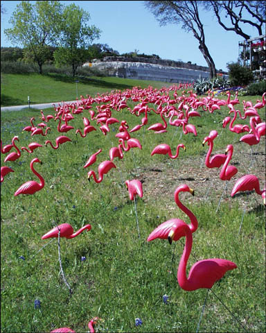 A lawn covered in pink plastic flamingos