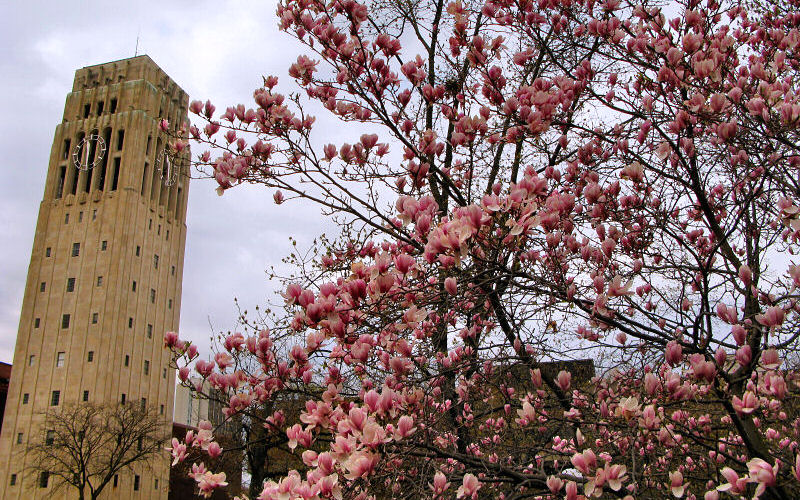 Spring In Ann Arbor Michigan Photos