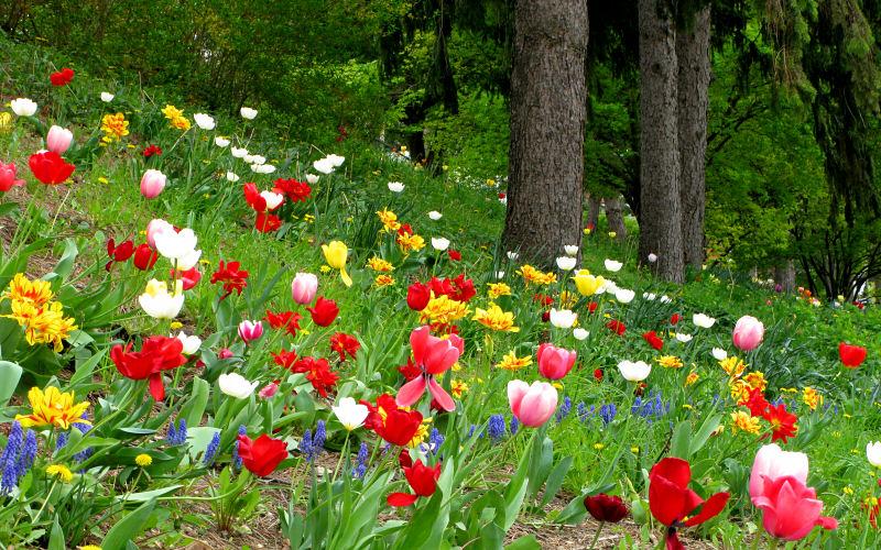 Seasons In Ann Arbor Michigan Photos