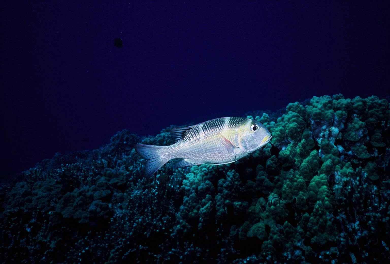 Hawaii Shark Dive Big Island