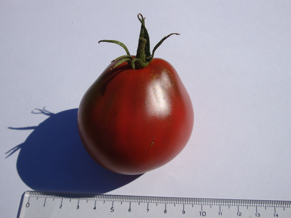 tomato personals Creating tomato grafts may be a great way to grow tomatoes organically tomato grafting has emerged as one good way to bring resistance to soilborne diseases to susceptible heirloom.